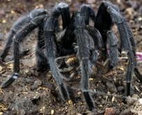 Pet Tarantula PLR 10 Article Pack Special