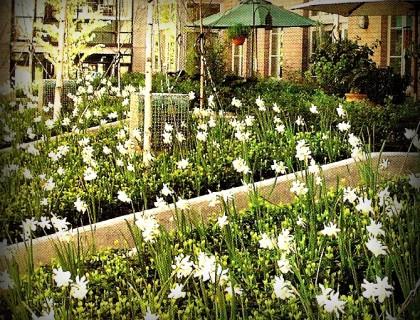 Kids Gardening PLR 10 Article Pack with Bonus Tweets